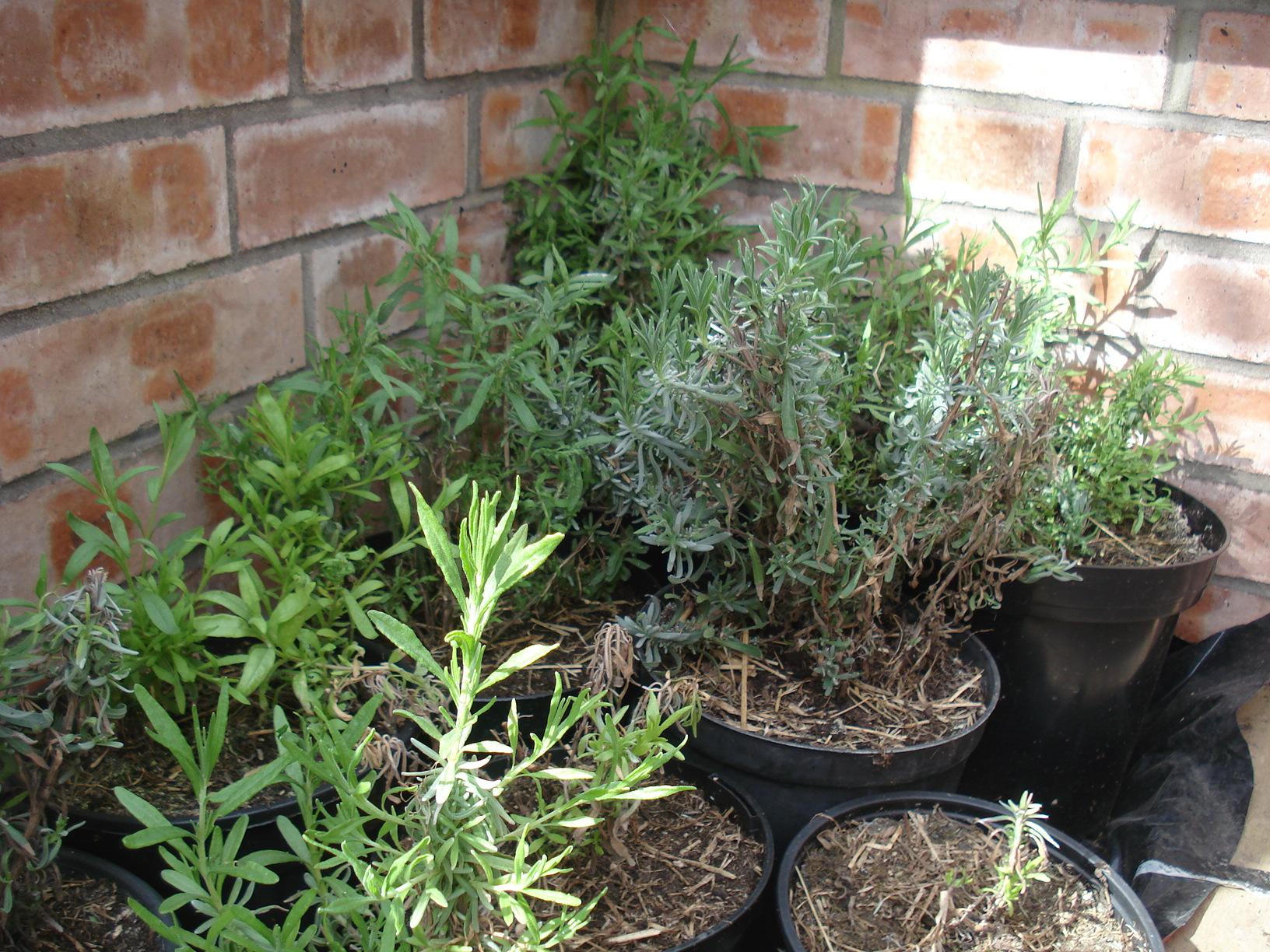 Best of friends - a quick guide to companion planting ... Leek Companion Plants