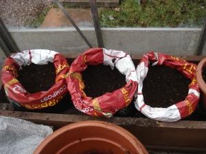 potato bags 240313