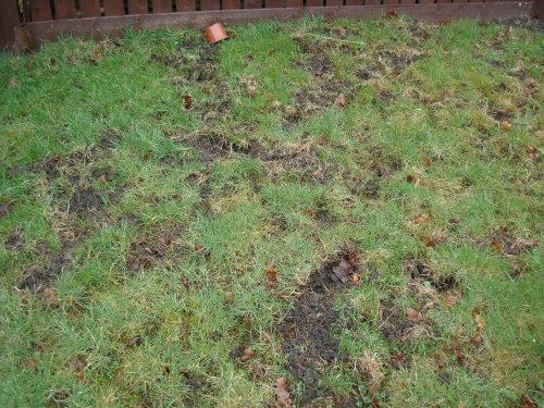 This is the grass in the back garden which has been scratched away leaving big holes.
