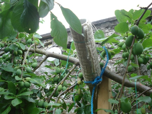 Mr Mac's DIY branch support fashioned from wood and carpet!